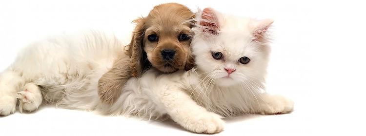 cuccioli